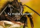 ka-mane-kamane-01